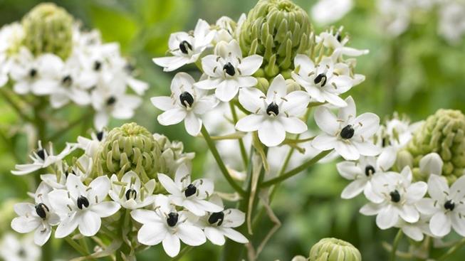 Diverse blomsterløg