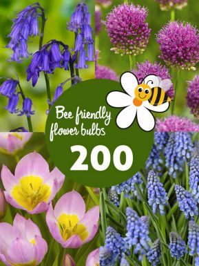 Bee friendly bulb collection