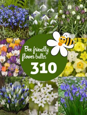 Bee friendly bulb collection - large