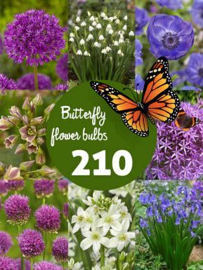 Butterfly friendly bulb collection