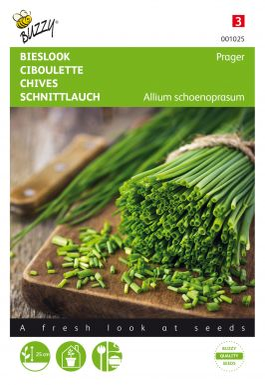 Chives allium schoenoprasum