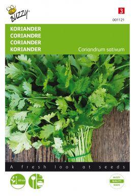 Coriander large seeded