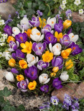 Large flowering mix