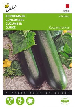 Cucumber johanna