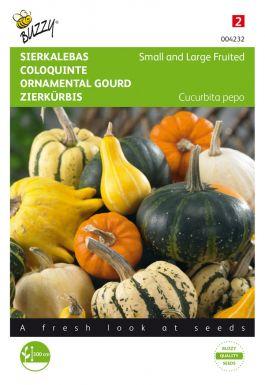 Cucurbita ornamental gourds