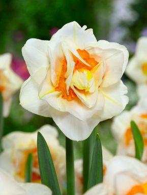 Flower drift