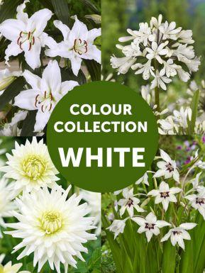 Collection ÉtÉ blanc