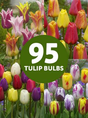 Tulip mega mix