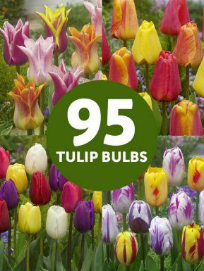Tulipes mega melange