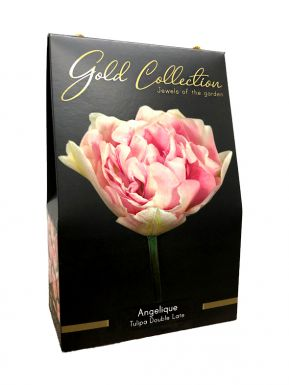 Angelique - gold collection