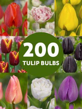 Collection best-seller de tulipes