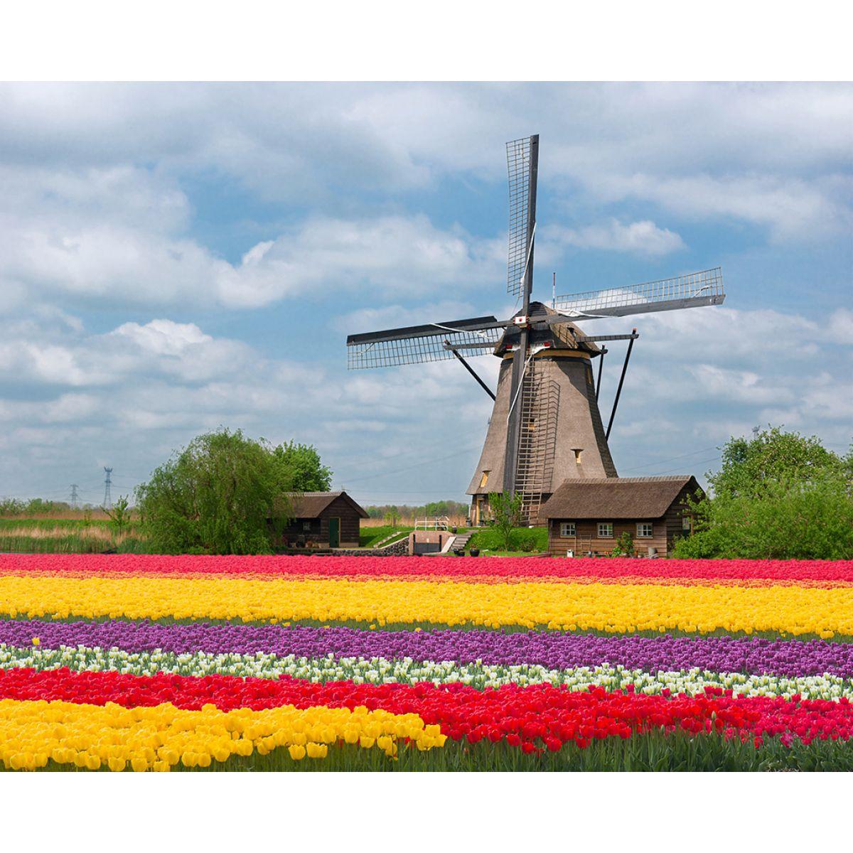 Buy The Best Flower Bulbs Online Bulbi
