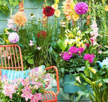 Bulbi a fioritura estiva